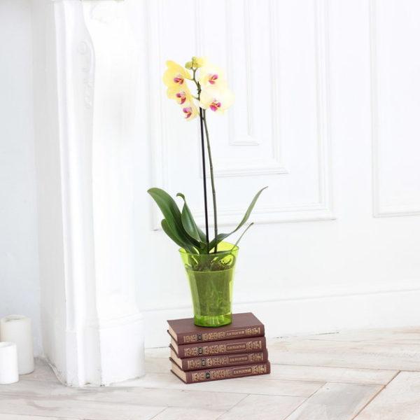 Для орхидей